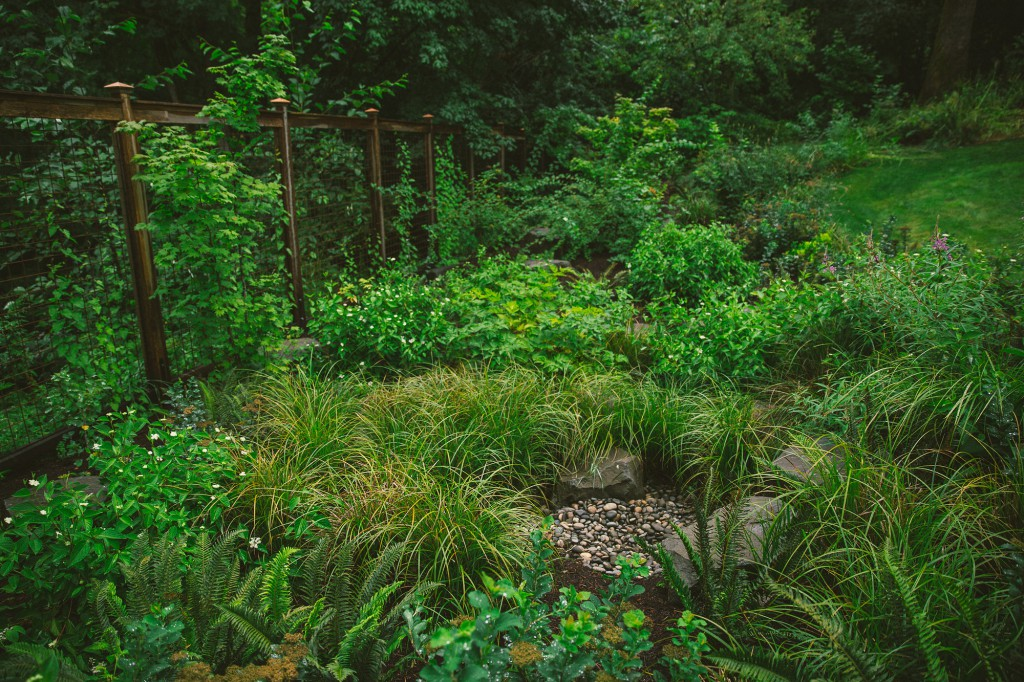 nw portland audubon certified backyard habitat tfgs