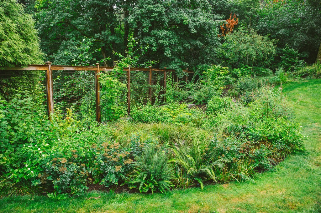 backyard habitat replete with edible gardens meandering paths a