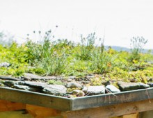 Yestermorrow Green Roof Design & Installation